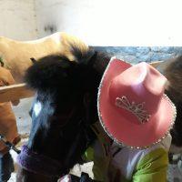 die Ponys werden geschmückt